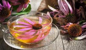 Способы применения цветов рудбекии в народной медицине