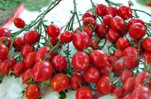 Поцелуй герани (Geranium Kiss ) США - растение очень компактное с плотными плодами
