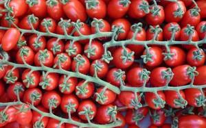 Рябиновые бусы - отличный сорт для выращивания в домашних условиях