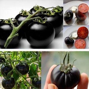Редкий сорт помидоров - Вишенка черная