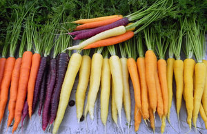 Выращивание моркови в грунте