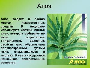Лечебные свойства растения алоэ