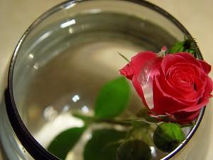 Как реанимировать розы в букете