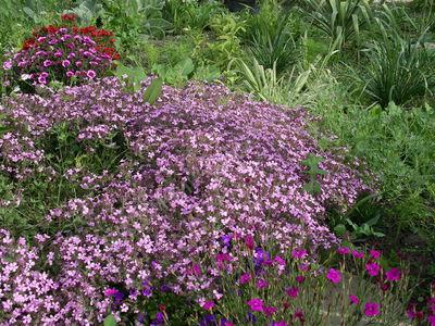 Многолетники почвопокровные растения цветущие все лето