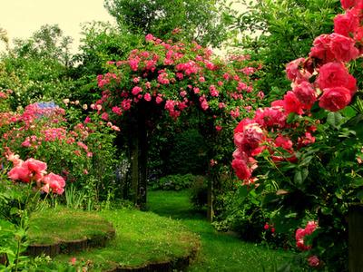 Препараты для обработки розы весной, применение медного купороса для защиты от болезней и вредителей