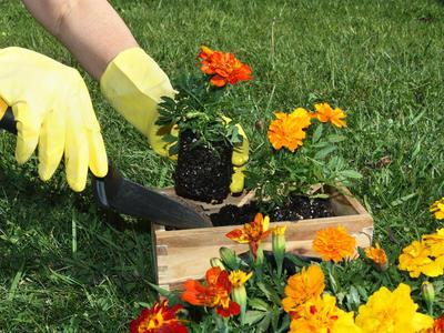 Весна в саду и огороде