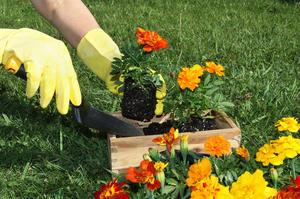 Работа весной в огороде