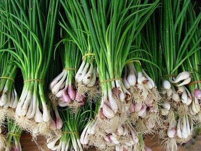 Посадка и выращивание лука батуна