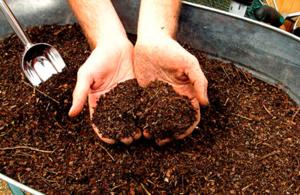 Хороший грунт для растения можно сделать и своими руками