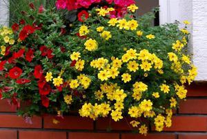 Как посадить в декоративных кашпо цветы