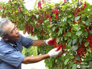 Как собирать уроожай