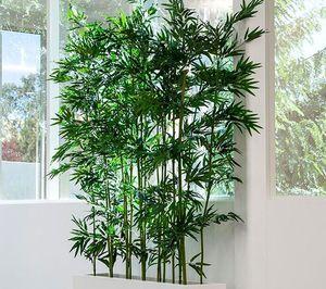 Декоративный бамбук в домашних условиях уход Flowery-Blog 22