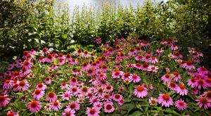 Какие есть вредители у растения