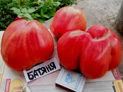 Томат Батяня - фото, описание сорта, отзывы огородников