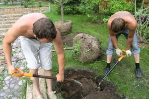 Как подобрать почву для посадки сливы