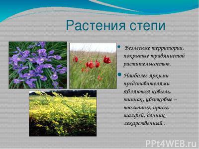 Какие растения растут в степи?