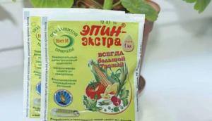 Для профилактики можно подкармливать томаты иммуностимуляторами