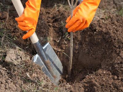 Как посадить абрикос весной пошаговое руководство