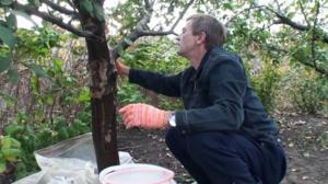 Многие садоводы предпочитают механический способ борьбы