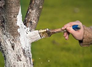 Для снижения риска появления цветоеда делайте профилактику