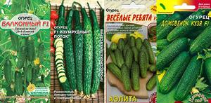 Как вырастить огурцы на подоконнике - подбираем семена