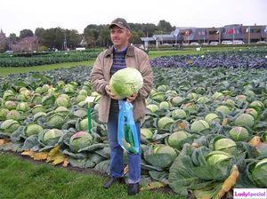 Выращивание капусты и уход за ней