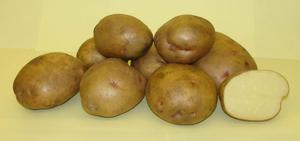 Ранние сорта картофеля: фото, описание, посадка