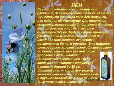 Растение лен: его внешний вид и история появления, использование людьми