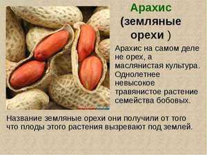 Описание и история происхождения земляного ореха