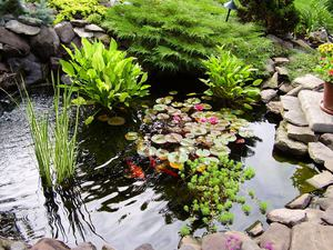 Группировка водных видов растений
