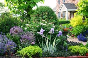 Выбор влаголюбивых растений