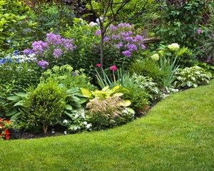 Высадка влаголюбивых растений в низине