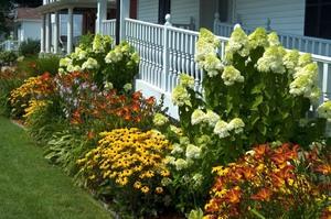 С какими растениями посадить лилейники