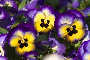 9 ярких двулетников, которые нужно посеять в июне