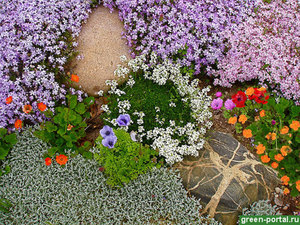 Какие растения посадить в саду