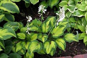 Как размножить растения