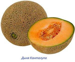 Канталупа- дыня