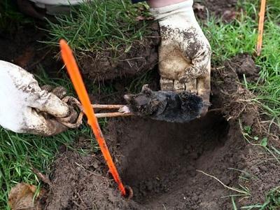 Способы борьбы с кротами огороде. Как избавиться от кротов на участке: средства и способы
