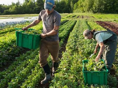 Рациональное земледелие с чего начать