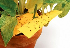 Причины мошек на растениях