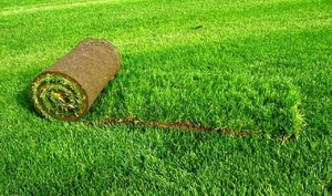 Как постелить газон