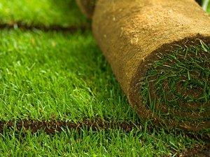 Как стелить газон