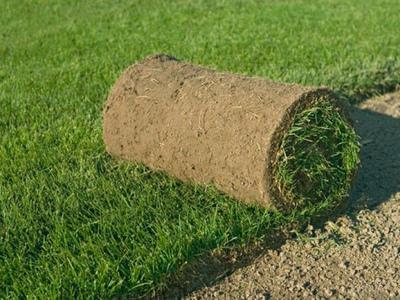 Что скажите про живой газон в рулонах