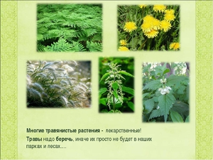 пример травы