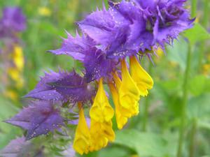 Лечебная сила цветка