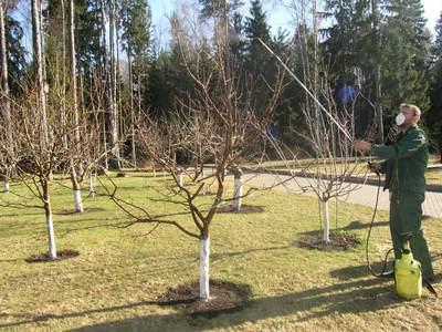 Когда и чем опрыскивать плодовые деревья весной