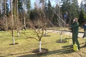 Как ухаживать за садом весной