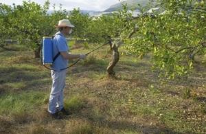 Весенняя обработка и опрыскивание деревьев