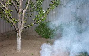 Способы применения табачной пыли от садовых вредителей