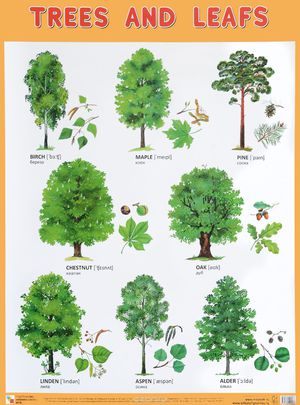 деревья с названиями в картинках